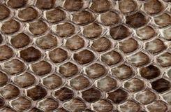 Snake skin. Royalty Free Stock Photo