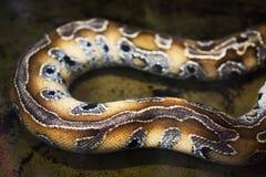Snake skin pattern Stock Photo