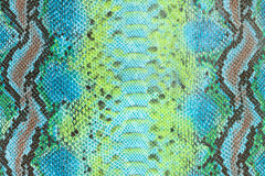 Snake skin texture Royalty Free Stock Photography