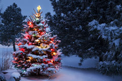 Snow Covered Christmas Tree Glows Brightly In The  Stock Image