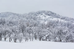 Snow covered hill Royalty Free Stock Photo