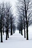 Snow desert with trees, loneliness and sadness Royalty Free Stock Photo