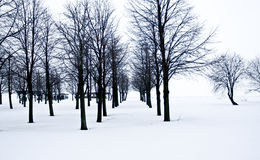 Snow desert with trees, loneliness and sadness Stock Images