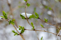 Spring and winter Stock Photos