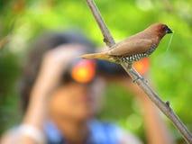 Sorveglianza di uccello Fotografia Stock Libera da Diritti