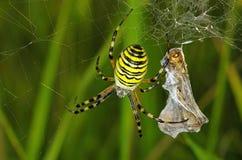 Spider prey Royalty Free Stock Photos