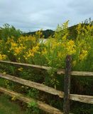 Split Rail Fence with Goldenrods blooming Royalty Free Stock Image
