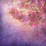 Spring Cherry Blossom Royalty Free Stock Photography