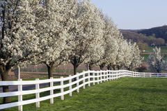 Spring Season Bloom Stock Photography