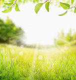 Spring summer nature background with grass, trees branch with green leaves and  sun rays Stock Images