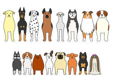 Standing dog Stock Images