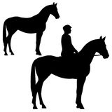 Standing horse Royalty Free Stock Image