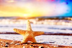 Starfish on the beach at warm sunset. Travel, vacation, holidays Stock Photo