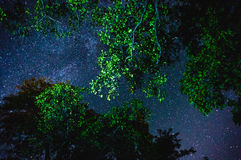 Stars through tree branches Stock Images
