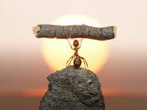 Statua di lavoro, civilizzazione delle formiche Fotografia Stock