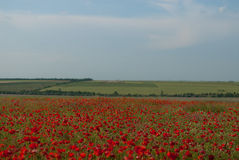 Steppes and fields of Ukraine Royalty Free Stock Photography