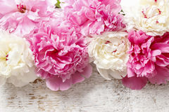 Stunning pink peonies, yellow carnations and roses Royalty Free Stock Image