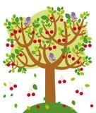 Summer tree Stock Photos