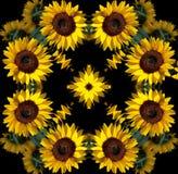 Sunflower mandala Royalty Free Stock Image