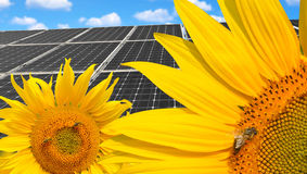 Sunflowers with solar energy panels. Royalty Free Stock Photo