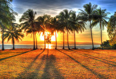 Sunlight rising behind palm trees in HDR, Port Douglas,Australia Stock Images