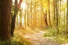 Sunlit nature path Royalty Free Stock Photos