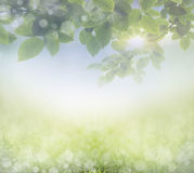 sunny natural background Royalty Free Stock Photography