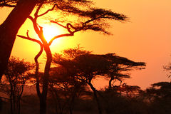 Sunset in the African bush Stock Photo