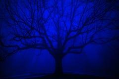Surreal Boom in de Winter Blauwe Mist Royalty-vrije Stock Afbeelding