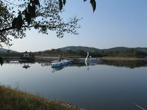Swan lake serenity Stock Images