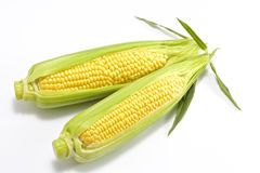 Sweet fresh corn Stock Photo