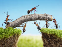 Team of ants constructing bridge, teamwork Royalty Free Stock Images