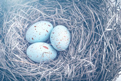 Three eggs in the nest for easter with dreamy blue toning Stock Photography