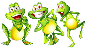 Three smiling frogs Royalty Free Stock Photography