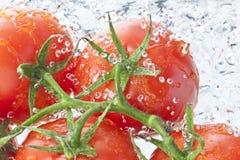 Tomatoes Water Spray Fresh Food Royalty Free Stock Photos