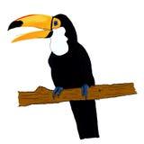Toucan Imagenes de archivo