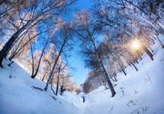 Tourist in winter birchwood Stock Photos