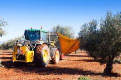 Traktor, der schwarze Oliven in Anlage erntet Lizenzfreie Stockfotos