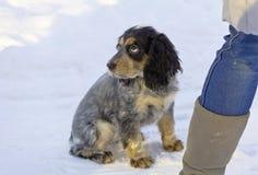 Trauriges Hundspaniel sitzt an einem Park auf einer schneebedeckten Straße Lizenzfreies Stockbild