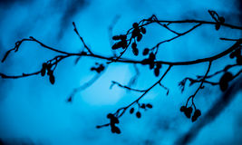 Tree branches Royalty Free Stock Image