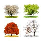 Tree in four season Royalty Free Stock Photos