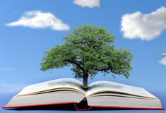 Tree of knowledge Stock Image