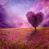 Tree of love Royalty Free Stock Photos
