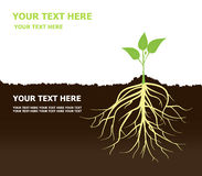 Tree with Roots Plant roots Soil Stock Image