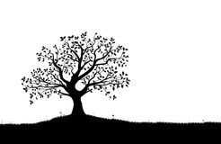 Tree Silhouette, Black and White Vector Shape Royalty Free Stock Images