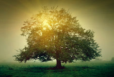 Tree with sunlight Stock Photos