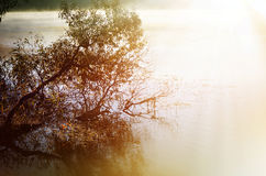 tree in the water Stock Photography