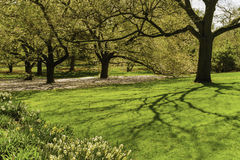 Trees, Plants, Botanical Garden, New York Royalty Free Stock Photos