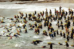 Triathlon start Stock Photography