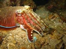 Tropical sea creature close up Stock Photos